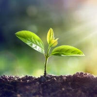 Image of seedling growing.
