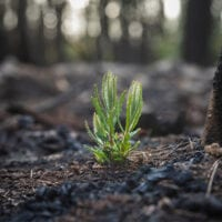 Image of bushfire regrowth.